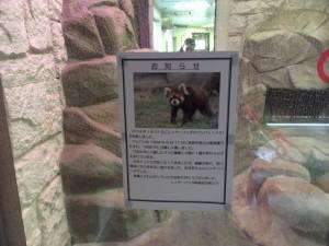 天王寺動物園!
